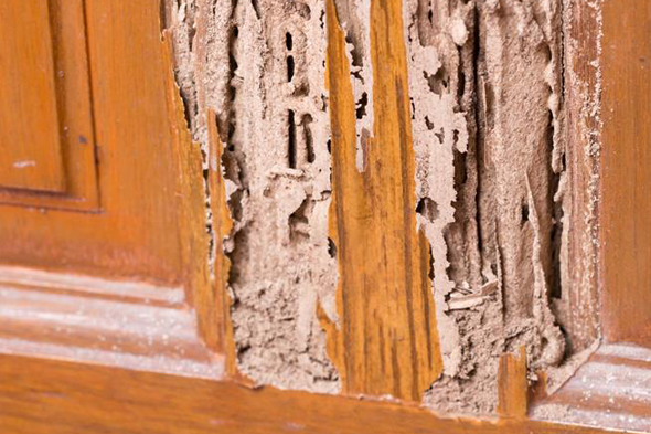 termite inspection services austin texas